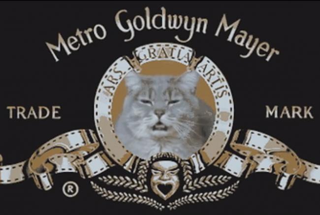 All Meow Life 01