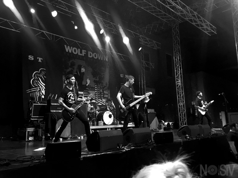 Wolf Down 01