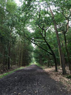 Waldweg A Summer's Tale